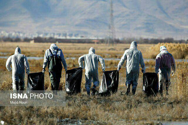 ۳ پرنده مبتلا به آنفلوآنزای فوق حاد پرندگان در دریاچه چیتگر + عکس