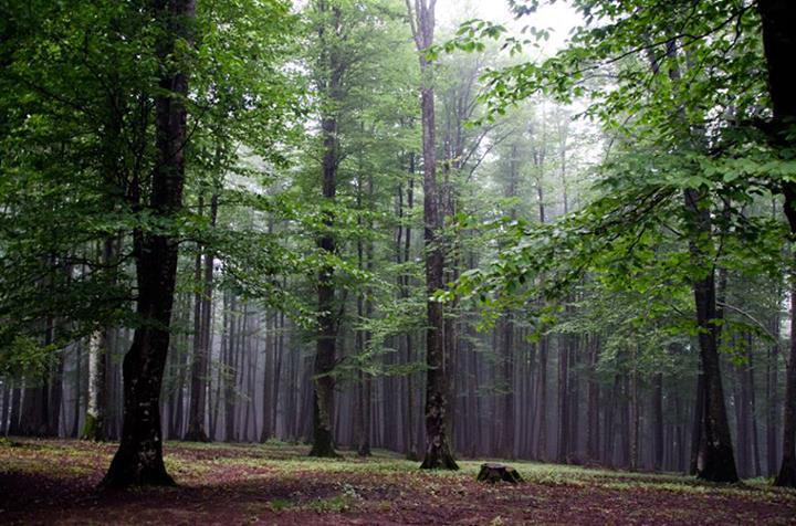 منابع طبیعی با متجاوزان به جنگل های هیرکانی برخورد کند