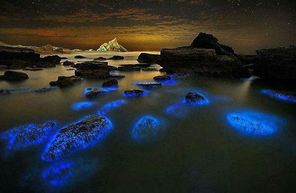 منظره شگفت انگیز پیکوپلانکتون های آبی رنگ در هرمزگان