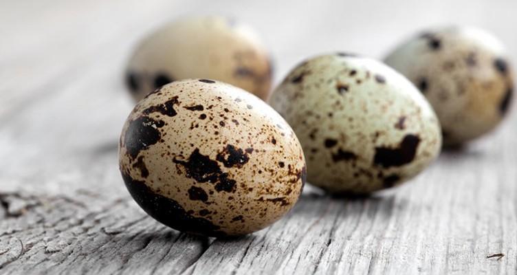 فواید شگفت انگیز تخم بلدرچین که از آنها بی خبرید