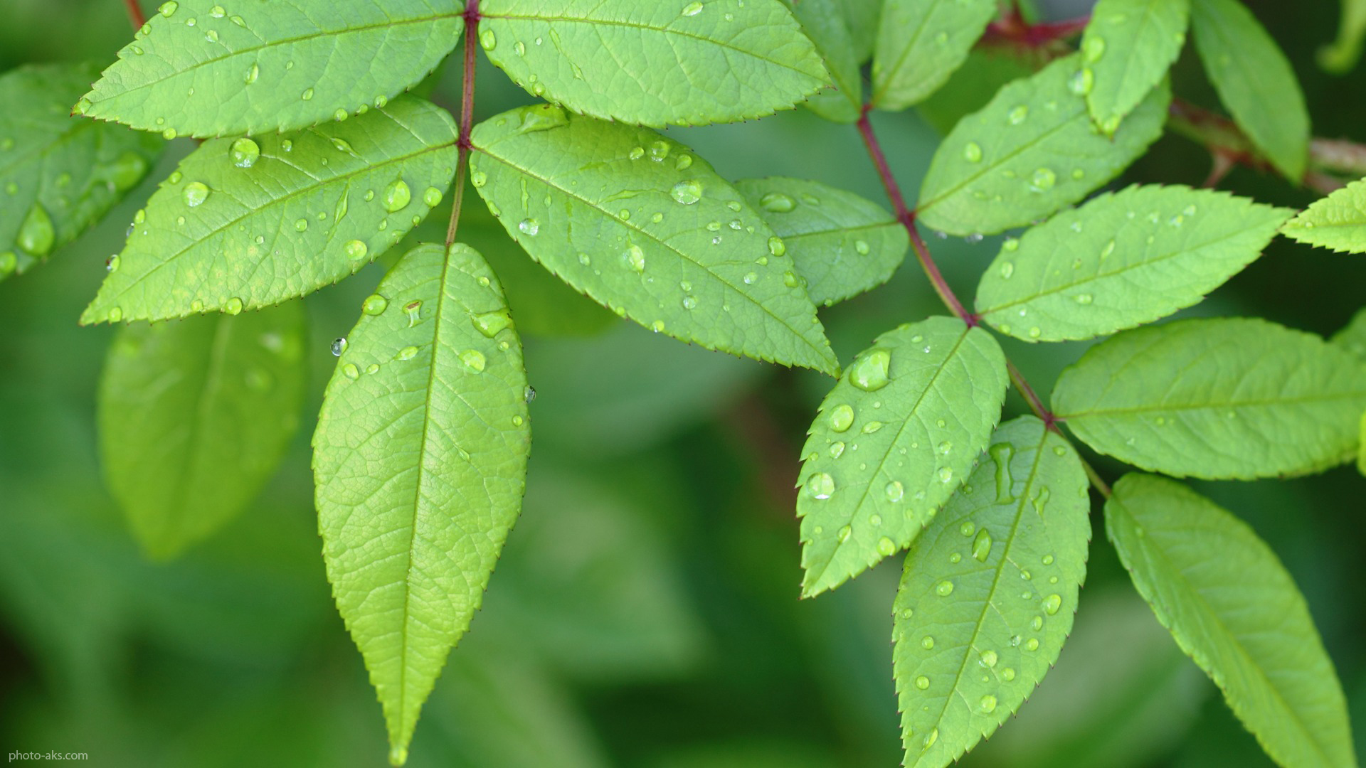 گیاهانی که بوی عرق تان را از بین می برند