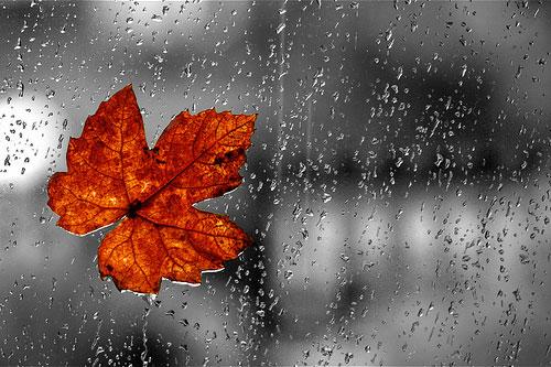 فردا بیشتر مناطق کشور بارانی است