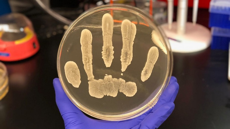 این باکتری ها از انسان در مقابل سرطان محافظت می کنند