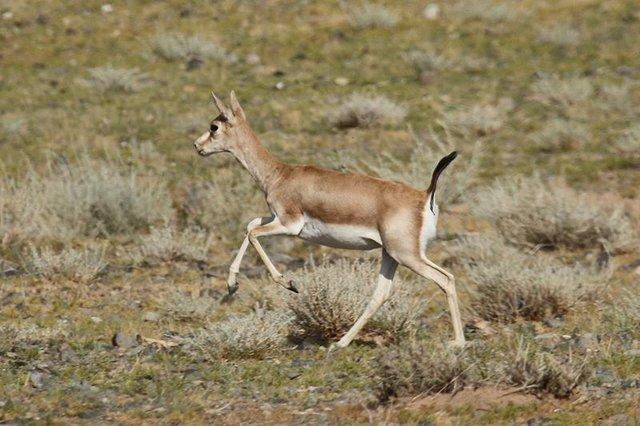 بی قانونی منشأ شکلگیری پروندههای تعرض به حیات وحش