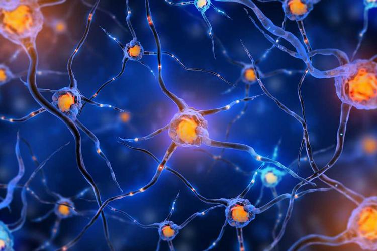 واکنش سلولهای عصبی برای کنترل التهاب در بدن