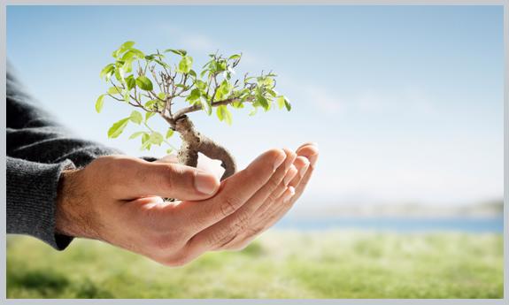 ۱۳ فروردین زمان مناسبی برای کاشت درخت در تهران نیست