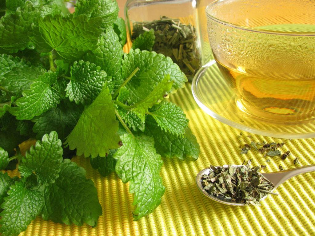 هشدار؛ این گیاه دارویی برای فشارخونیها مضر است