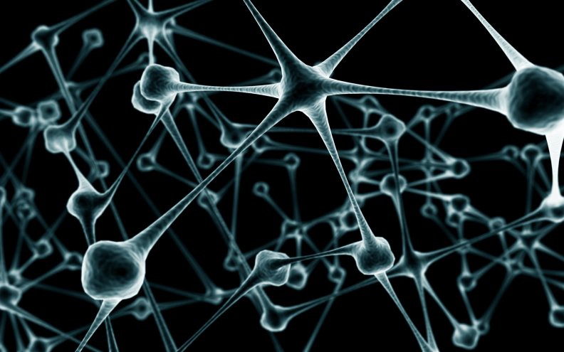 پیوند سلولهای بنیادی انسان به میمونهای مبتلا به آسیب نخاعی