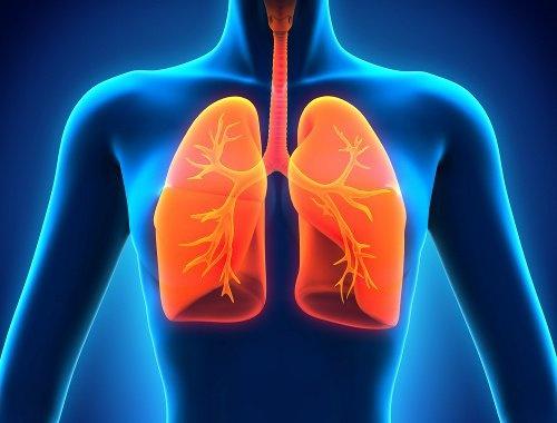 نقش سلول های عصبی در عفونت های ریه