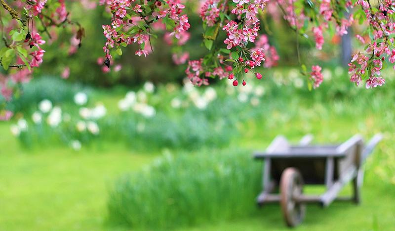 چرا بهار امسال زودتر آغازشده است؟