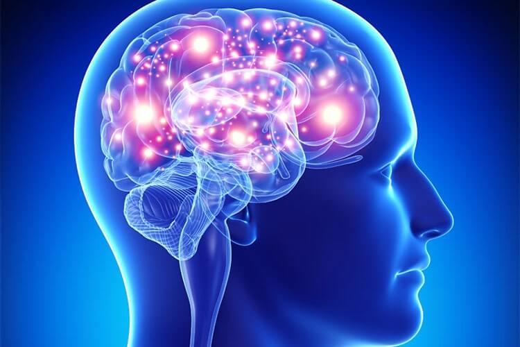 مغز انسان بالغ نورون جدید تولید نمیکند