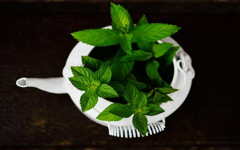 سبزی پر خاصیت بهاری برای درمان تمام بیماری ها