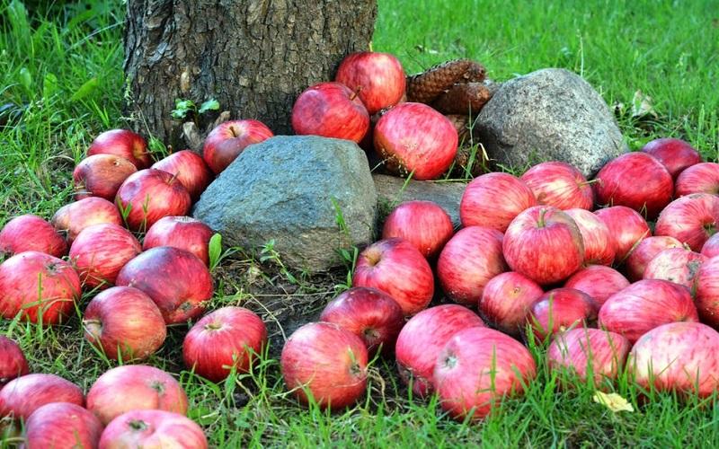یک میوه، در برابر هزار مشکل