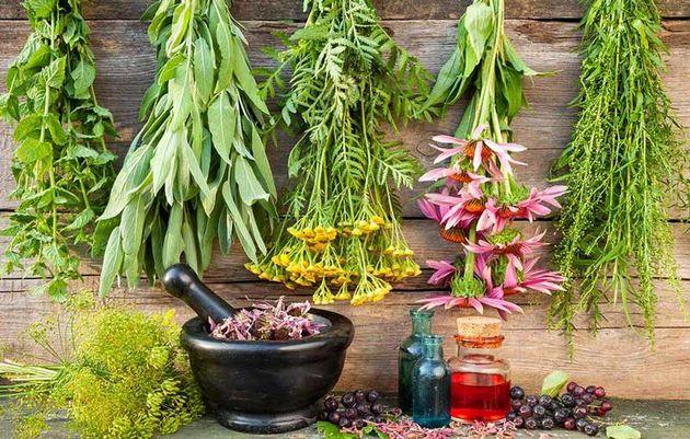 ۱۰ گیاه دارویی که عفونت را از بدن دور میکند