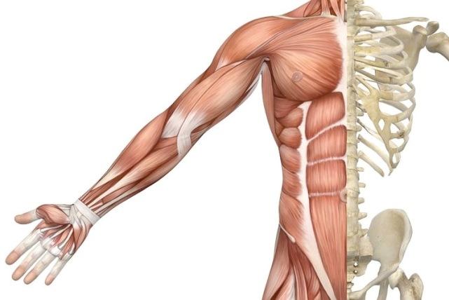 داربستی نوین برای رشد سلول های عضلانی