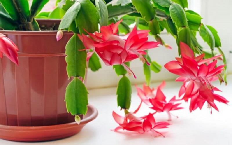 از نگهداری این گیاهان در خانه خودداری کنید