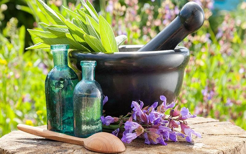 ۷ گیاهی که به طور طبیعی به کاهش استرس کمک می کنند