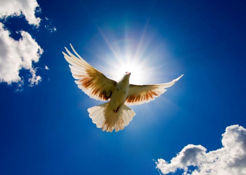 ابوالفضل قربانی کبوتر دیدن