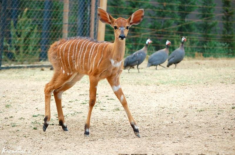 اغلب باغ وحش های کشور غیراستاندارد هستند