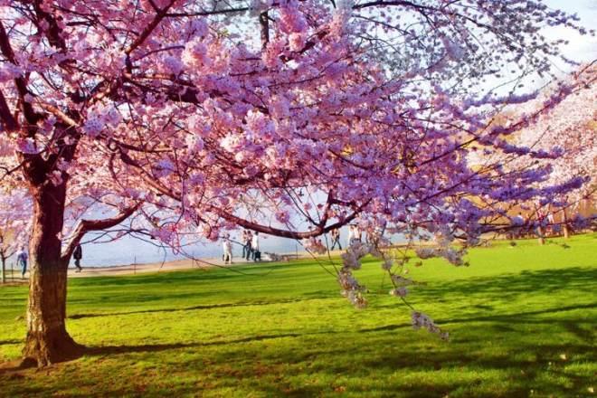 توصیه های طب سنتی برای سالم ماندن در بهار