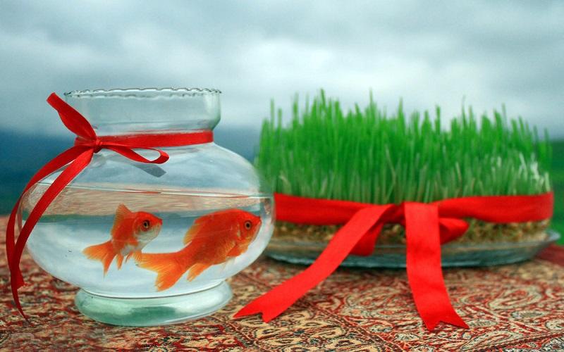 ماهیهای قرمز را رها نکنید