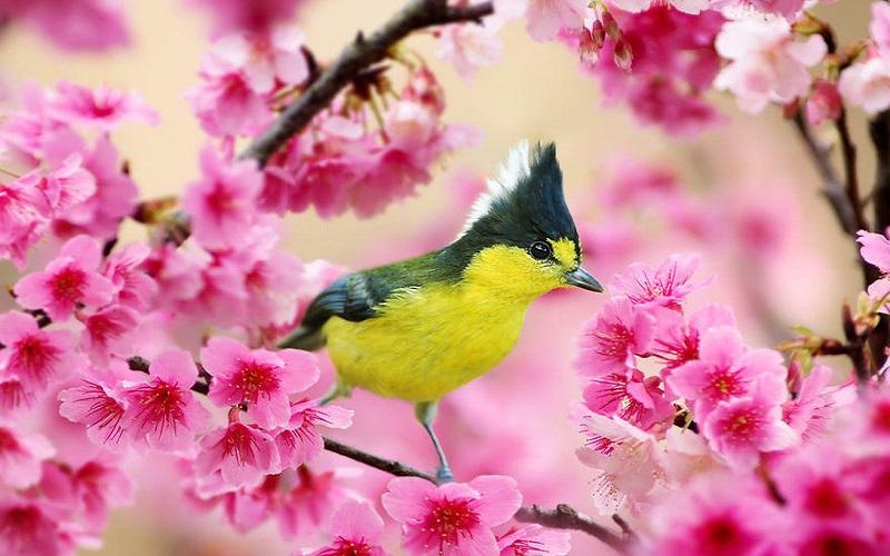 «فصل بهار» آیهای الهی از برپایی قیامت است
