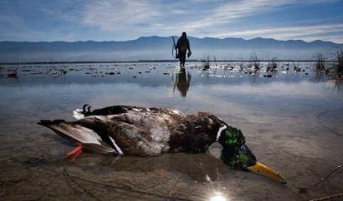 تداوم ممنوعیت شکار پرندگان وحشی تا رفع کامل خطر آنفلوانزا