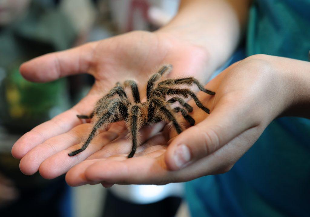با ۱۰ گونه از سمی ترین و خطرناک ترین عنکبوت های جهان آشنا شوید+عکس