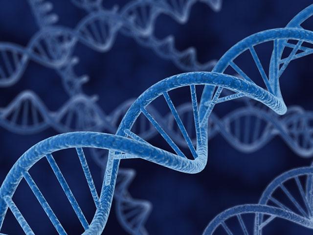 ساخت مولکولی با قابلیت شبیه سازی دی.ان.ای