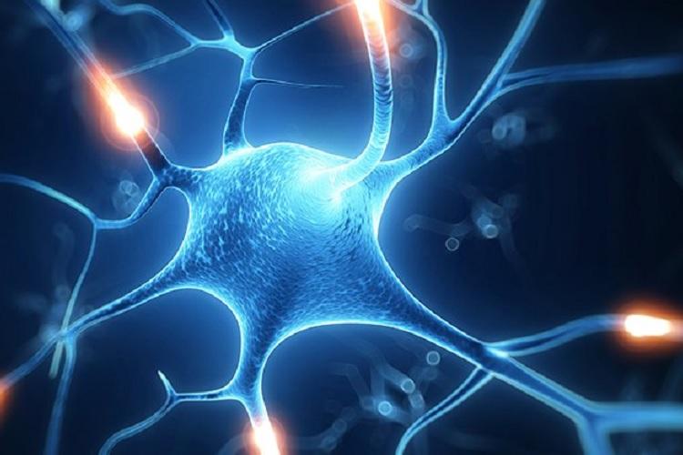 مشاهده تعامل سلولهای عصبی برای اولین بار