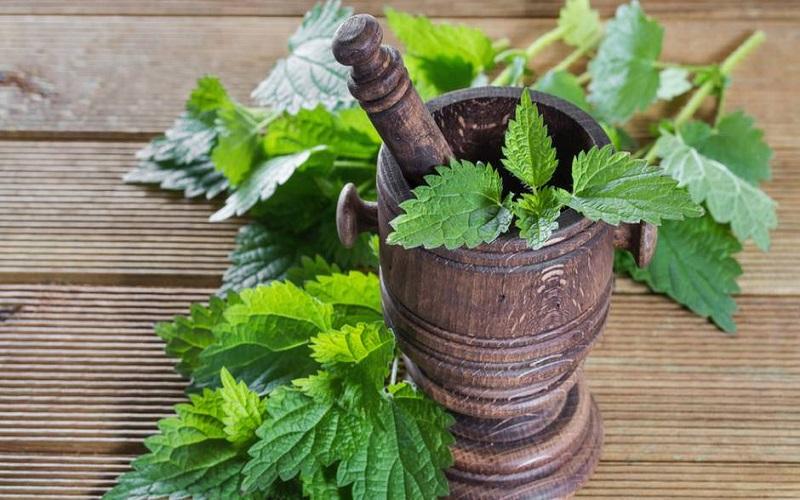 گیاه خارق العاده برای درمان کم خونی