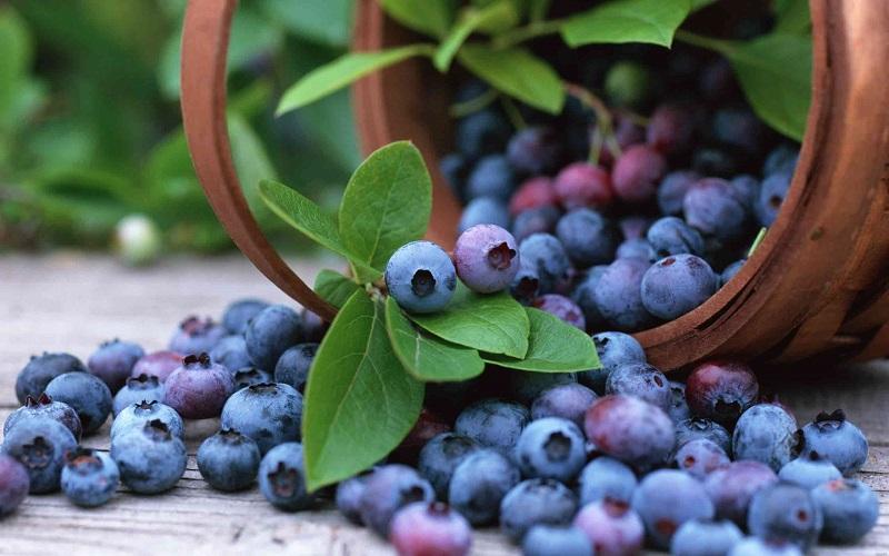 میوههایی که لاغر میکنند