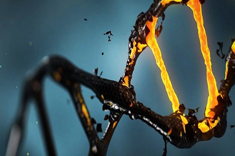 کشف نقش زباله ژنتیکی در بقای ژنوم انسانی
