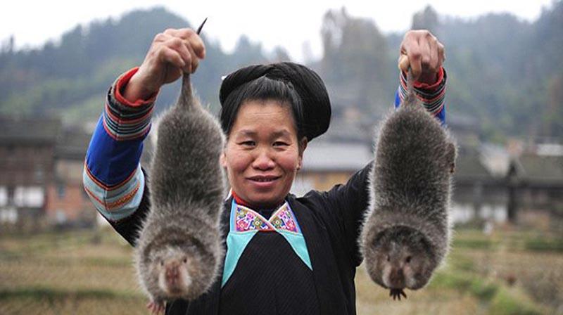 تجارت گوشت موش صحرایی در چین! + عکس