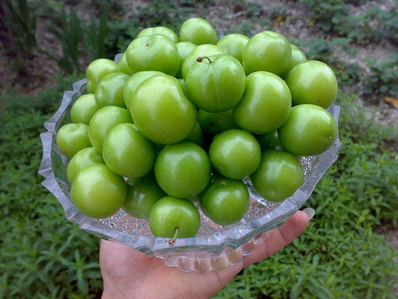 گوجه سبز برای چه کسانی خطرناک است؟