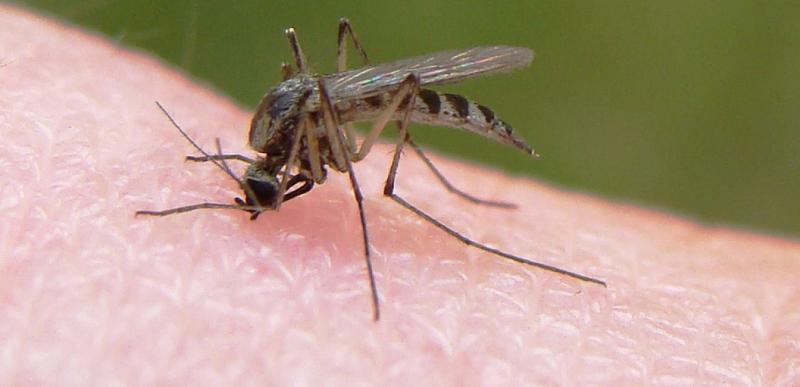 هشدار، شیوع مالاریا