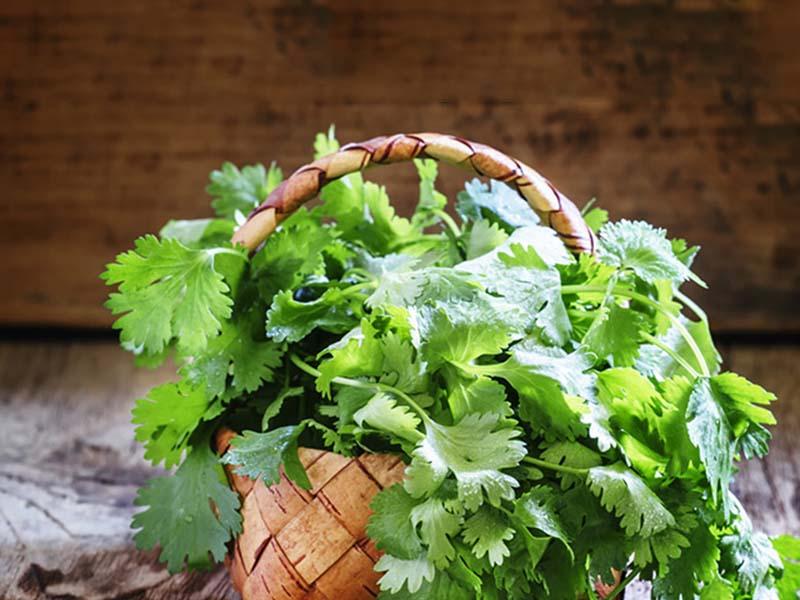 این گیاه درمان نفخ معده است