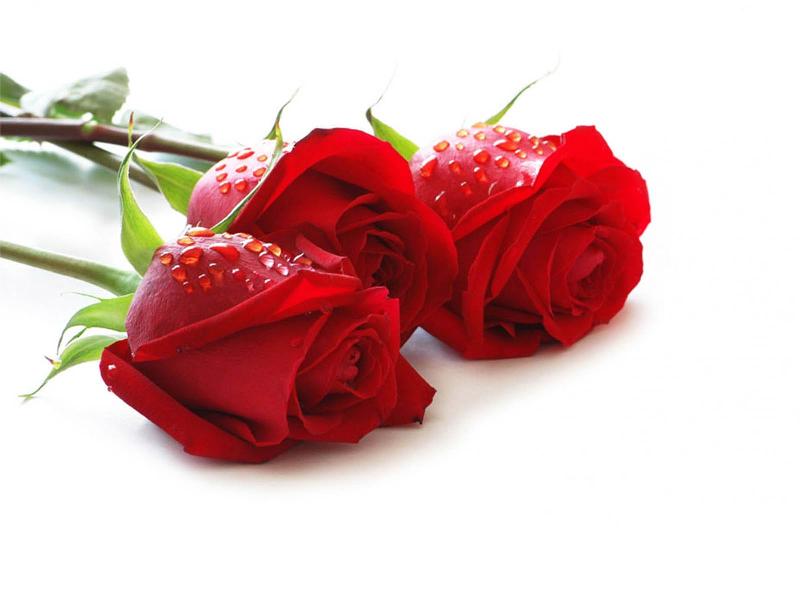 فواید استشمام گل ها در بهار