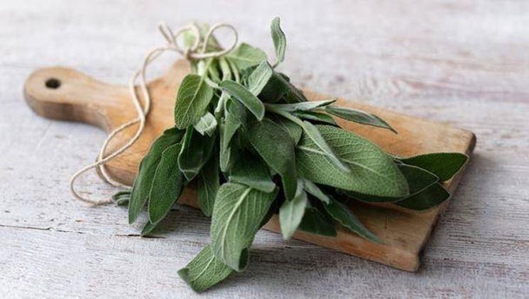 از رفع خستگی تا درمان آرتروز با این گیاه همه فن حریف