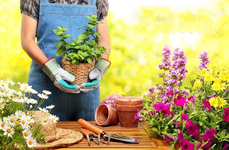 ۱۲ گیاهی که نگهداریشان در خانه به حفظ سلامت شما کمک میکند