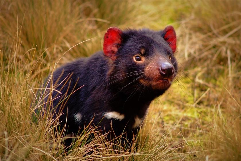 امیدی تازه برای نجات گونه در معرض خطرِ