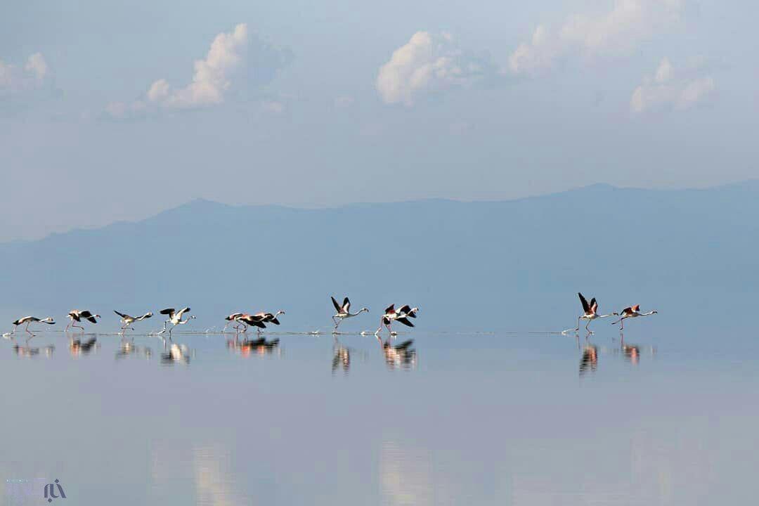 بازگشت مهمانان خارجی به دریاچه ارومیه + عکس