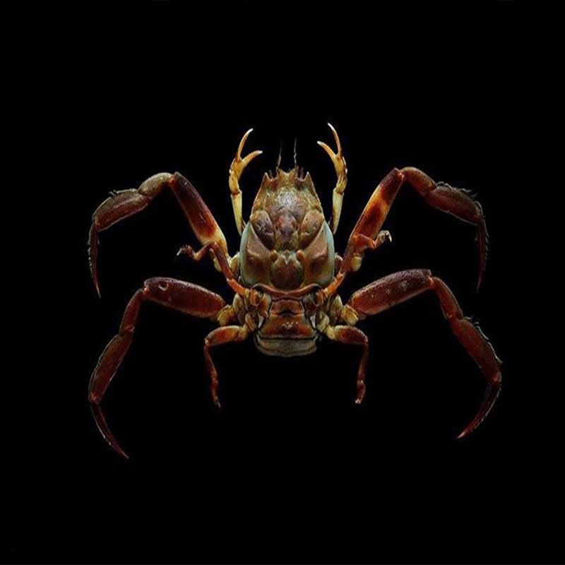 خرچنگی با چهره  شبیه به انسان+عکس