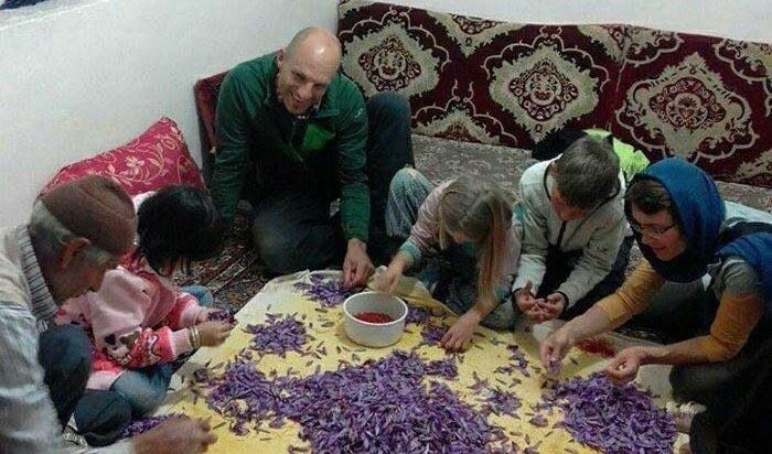 جهانگردان سوییسی درحال پاک کردن زعفران + عکس
