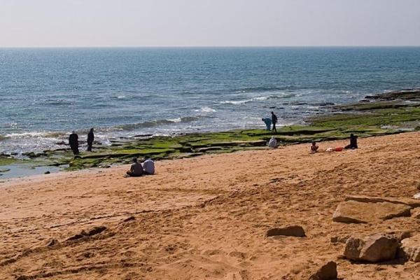 شناسایی جلبکهای مضر خلیج فارس با ماهواره
