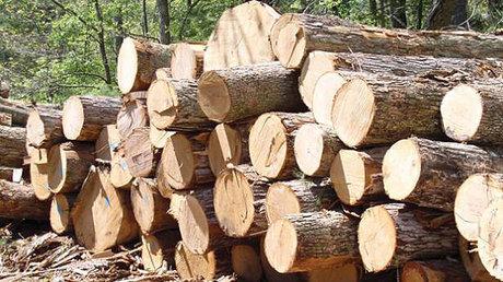 کشف 8 تن چوب جنگلی قاچاق در «رودسر»