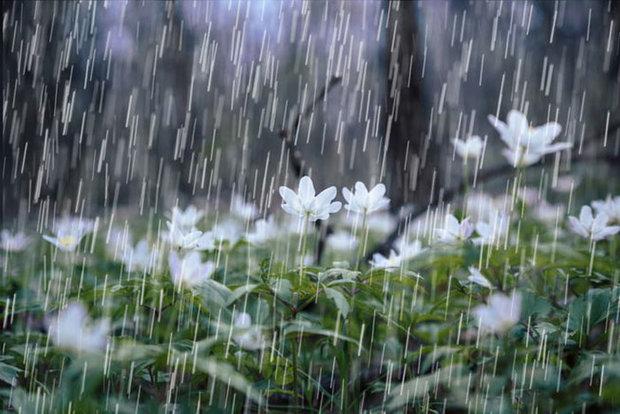 پیشبینی بارش باران در تهران