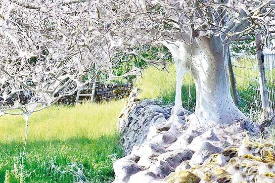 ترسناکترین درخت دنیا + عکس