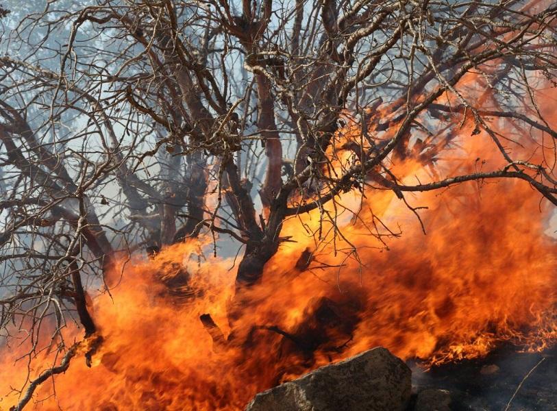 آتش سوزی در جنگل های قرخود مانه و سملقان