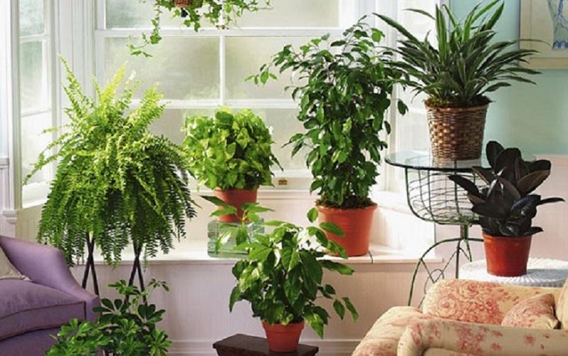 چگونه در گرمای تابستان از گیاهان خود مراقبت کنیم؟